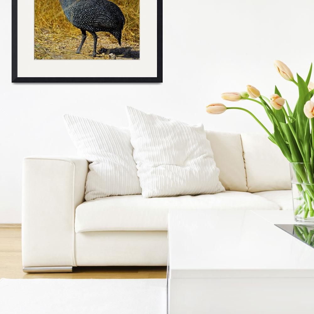 """""""Helmeted Guineafowl&quot  (2012) by pravine"""