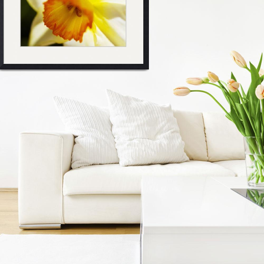 """""""White Daffodil, Selective Focus On Flower Center&quot  by DesignPics"""