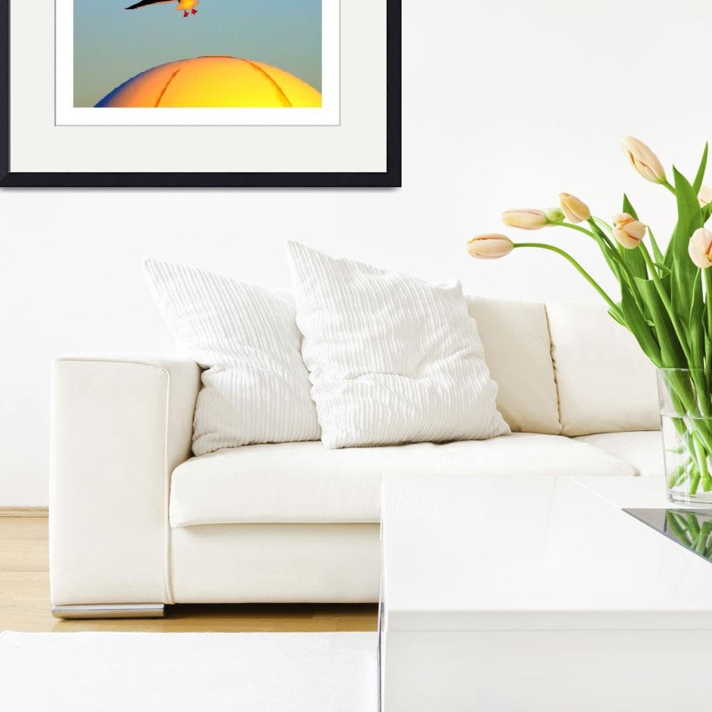 """""""Golden Seagull""""  (2019) by cattanphoto"""