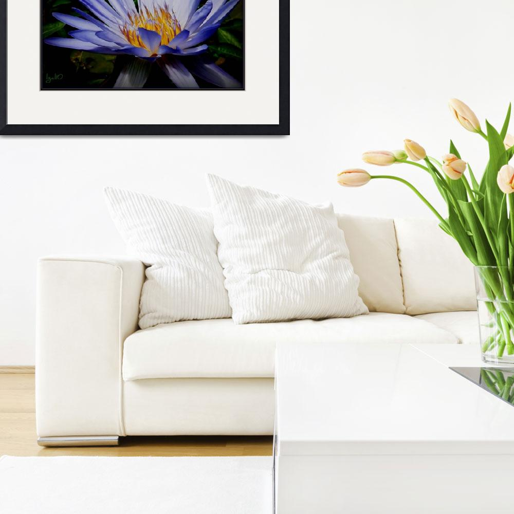 """""""Water Lilly Collection Nymphaea Caerulea""""  by imagistiks"""
