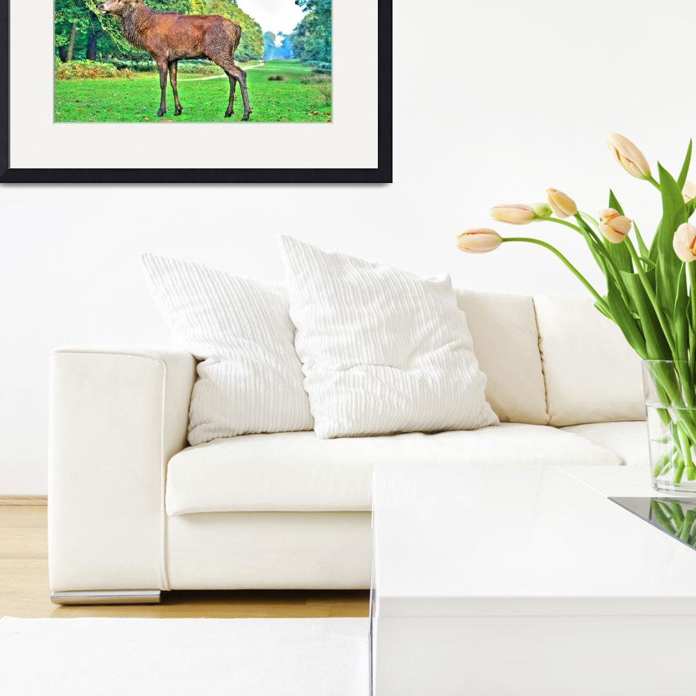 """""""Stag, Red Deer&quot  by dawnrosie"""