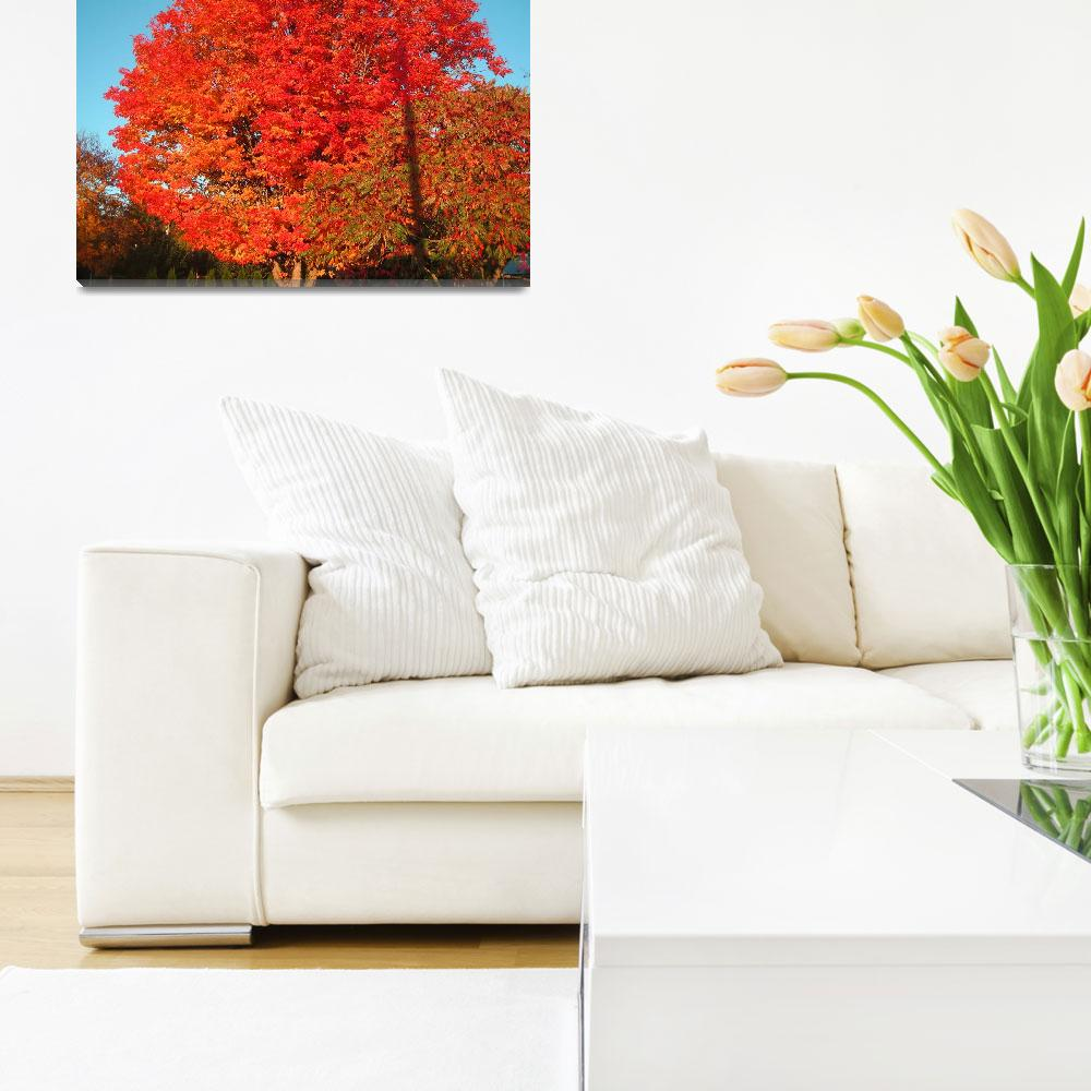 """""""Colorful Maple&quot  by garrykinney"""