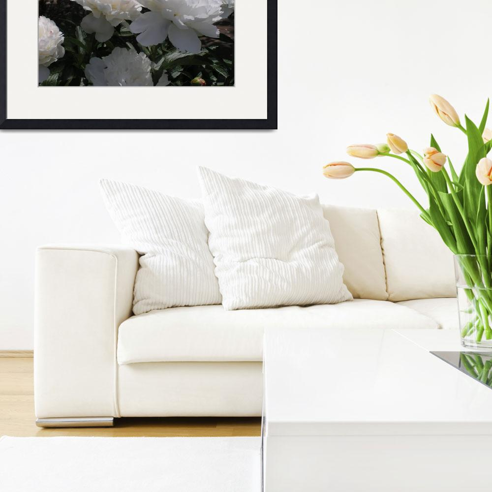 """""""White Peonies&quot  by bettymackey"""