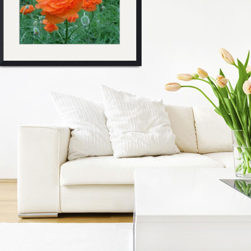"""""""Prince of Orange Oriental Poppies&quot  (2012) by vpicks"""