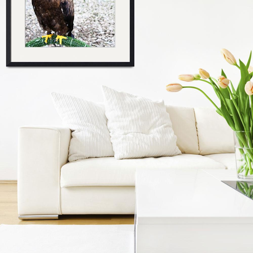 """""""Hawk on Perch&quot  by feophotos"""