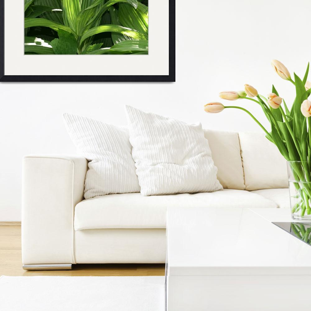 """""""False hellebore leaves&quot  (2004) by eye4nature"""