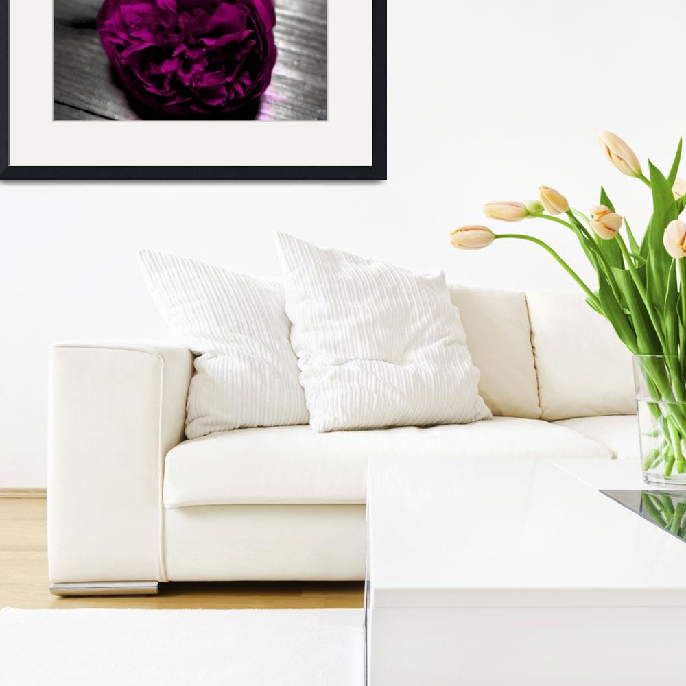 """""""Fuschia Peony in Black and White&quot  (2010) by KaliCollins"""