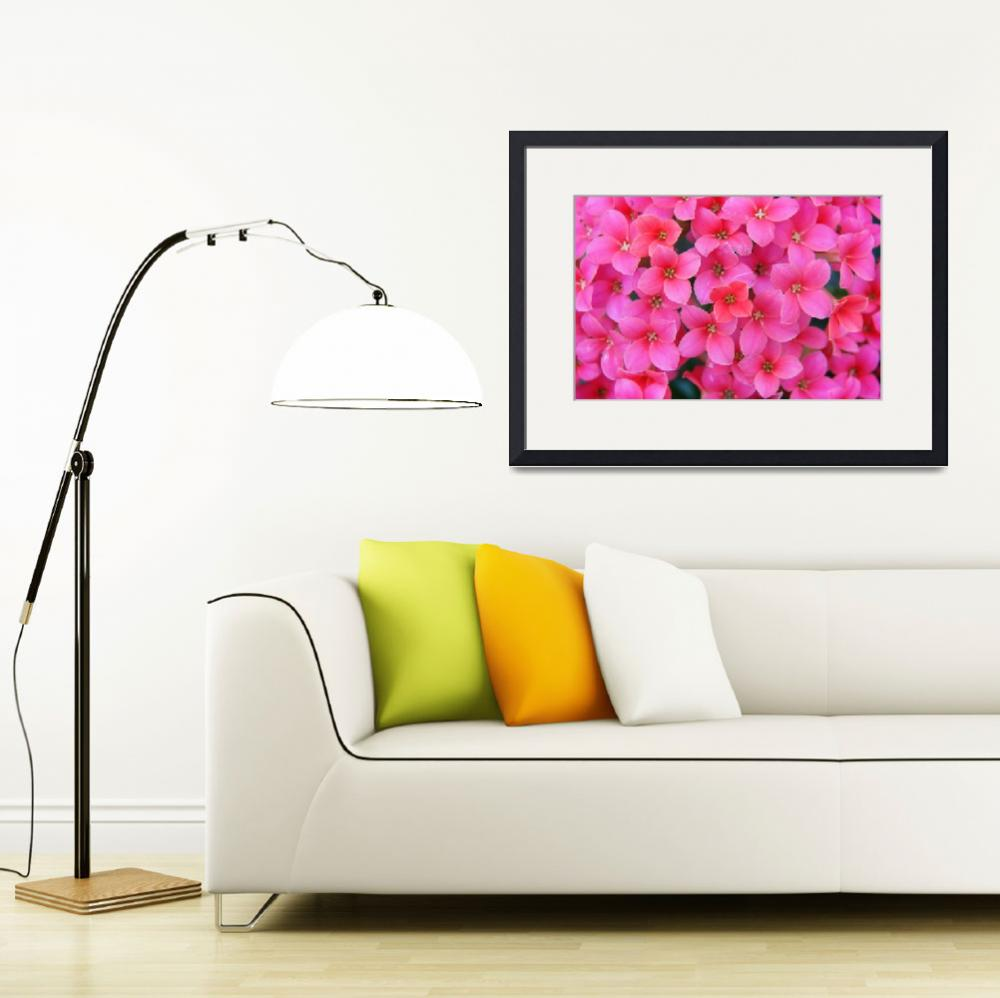 """Divine Pink Flower Stretched Canvas Prints""  (2013) by onenesspixels"