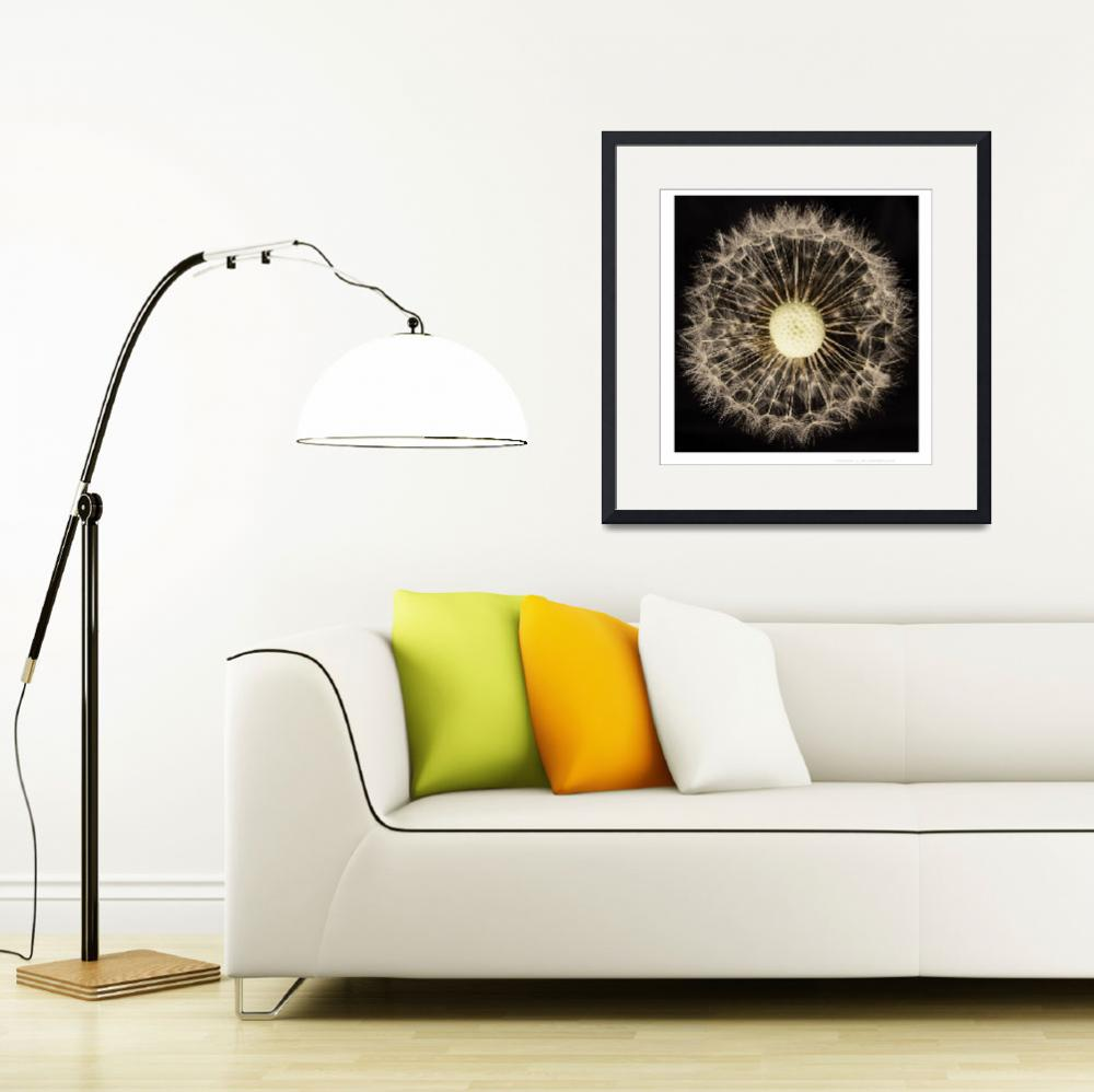 """Dandelion&quot  by JohnRobertson"