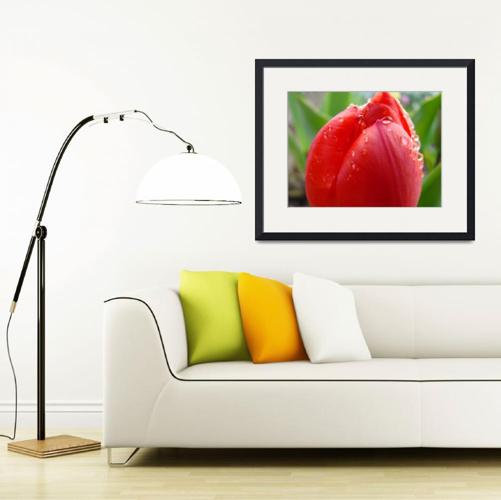 """TULIPS RED TULIP FLOWER 15 Spring Garden Flowers&quot  (2009) by BasleeTroutman"