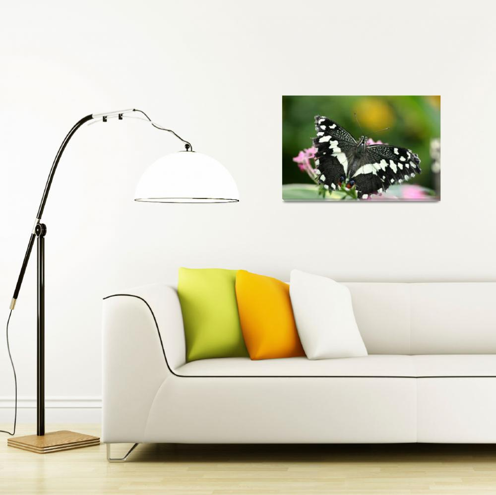"""""""Lime Swallowtail Butterfly""""  by pristinephoto"""