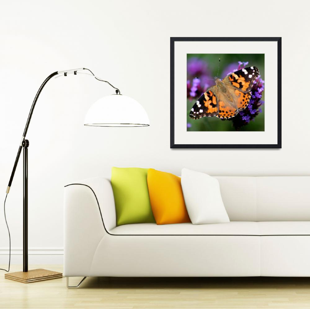 """""""Square American Painted Lady Butterfly&quot  (2013) by KsWorldArt"""