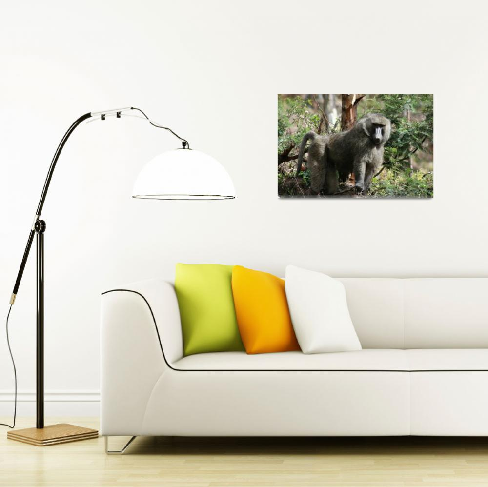 """Baboon in Forest Rwanda""  (2007) by CambridgeMedicalMission"
