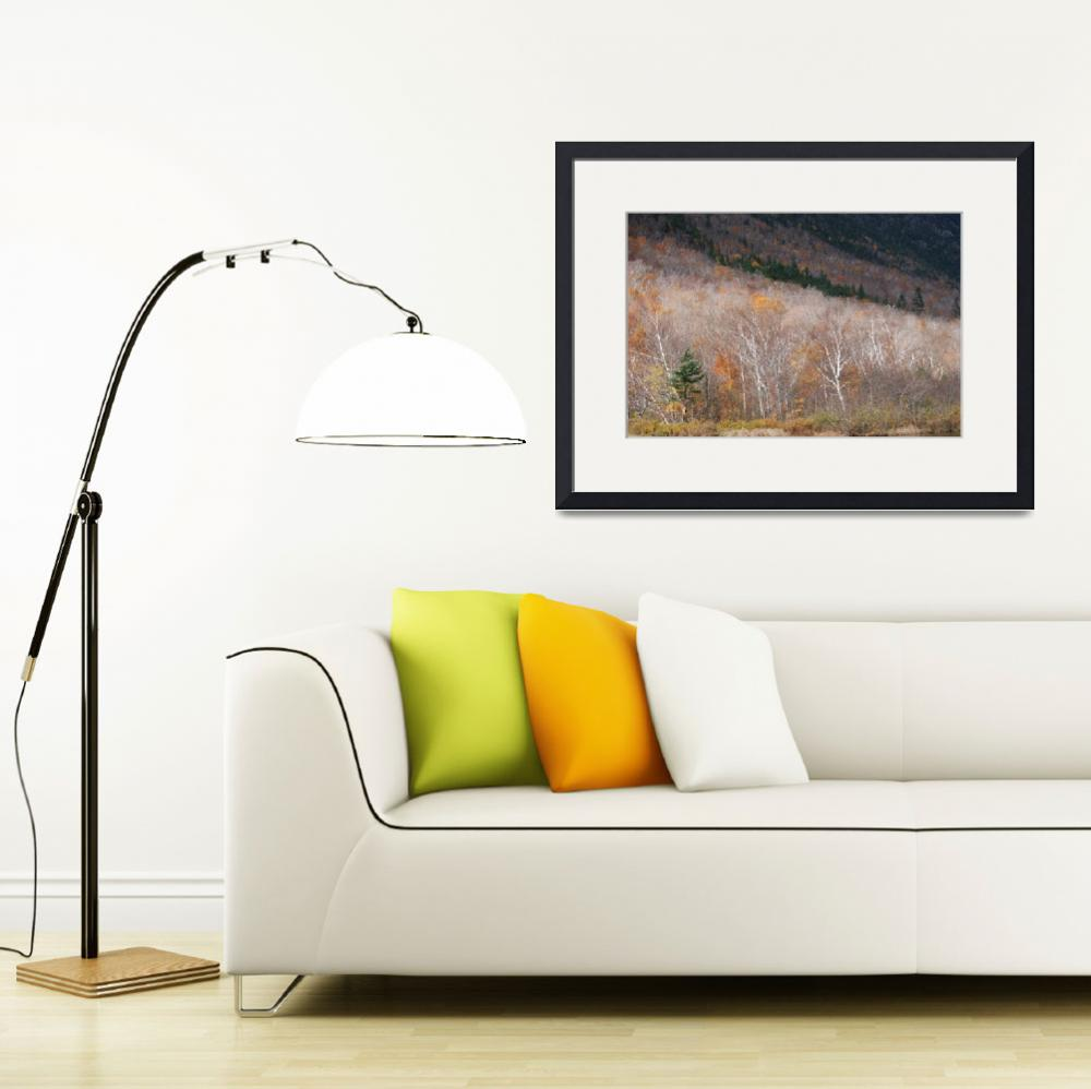 """Crawford Notch Birches&quot  (2009) by BobHurd"