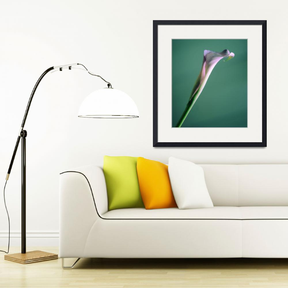 """Calla Lily - green&quot  (2012) by SYoungPhotography"