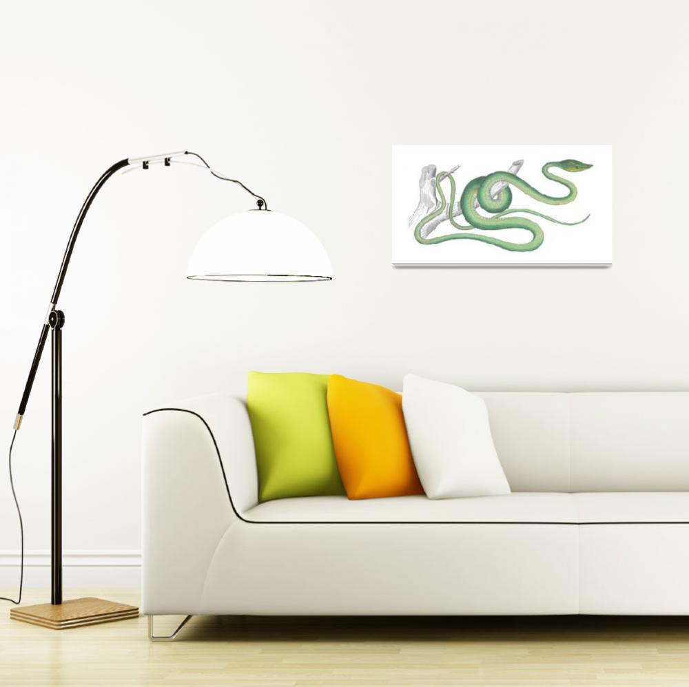 """Green Vine Snake (1843)""  by CoachwhipBooks"