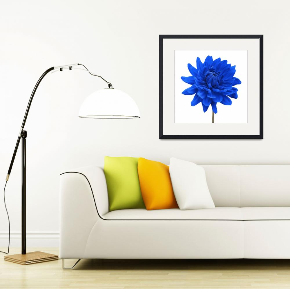 """Blue Dahlia Flower White Background""  by NatalieKinnear"