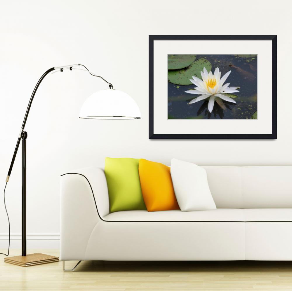 """""""Water Lily 1""""  by LindaSites"""