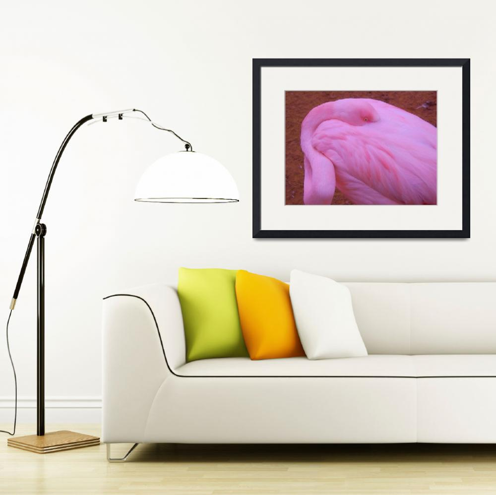 """Flamingo II""  (2014) by gallerymay"