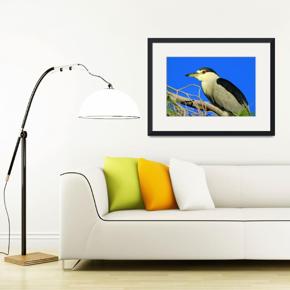 """""""Black-crowned Night Heron in Tree&quot  (2016) by SylviaClaiborne"""