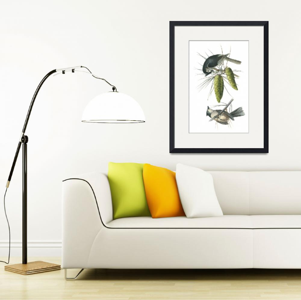 """Tufted Titmouse Bird Audubon Print""  by ArtLoversOnline"