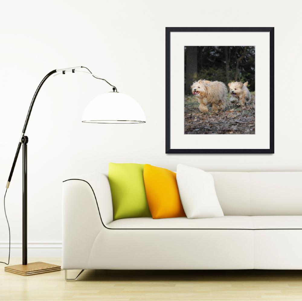 """""""Best Of Friends-Two Cavapoos&quot  by McallenPhotography"""
