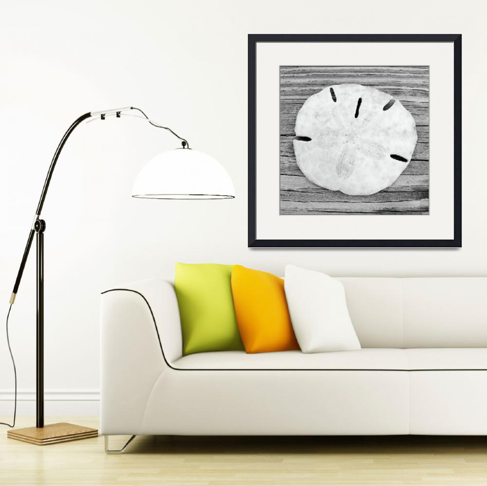 """Sand Dollar&quot  (2003) by christographer"