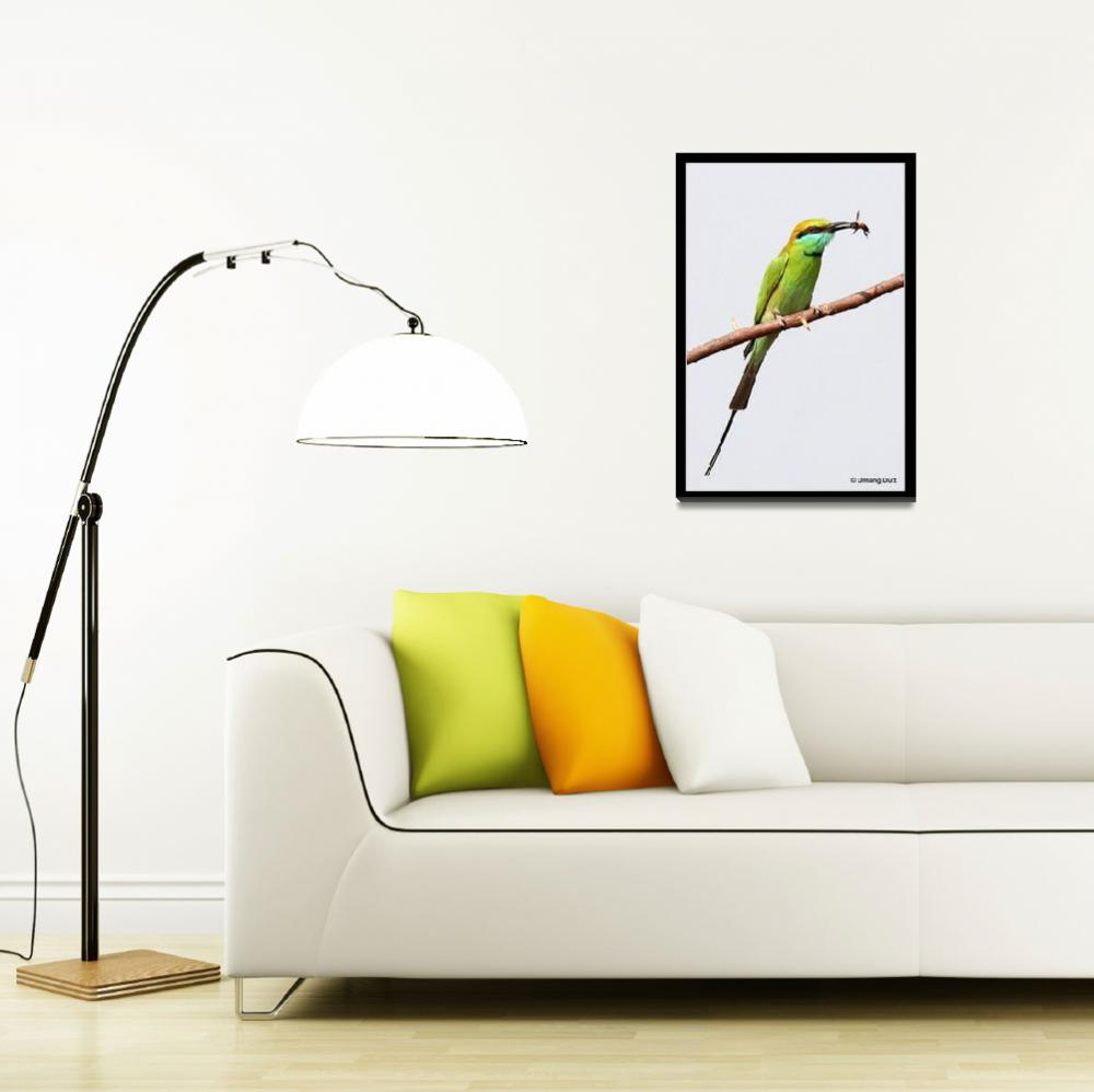 """""""The Little Green Bee-eater ( Merops orientalis)&quot  (2007) by umang"""