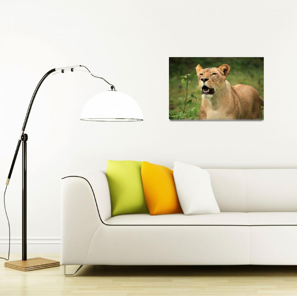 """Africa Animal Framed Photo&quot  by buddakats1"