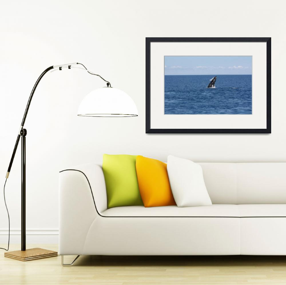 """""""NaP_ Whale Watching078&quot  by nevilleprosser"""