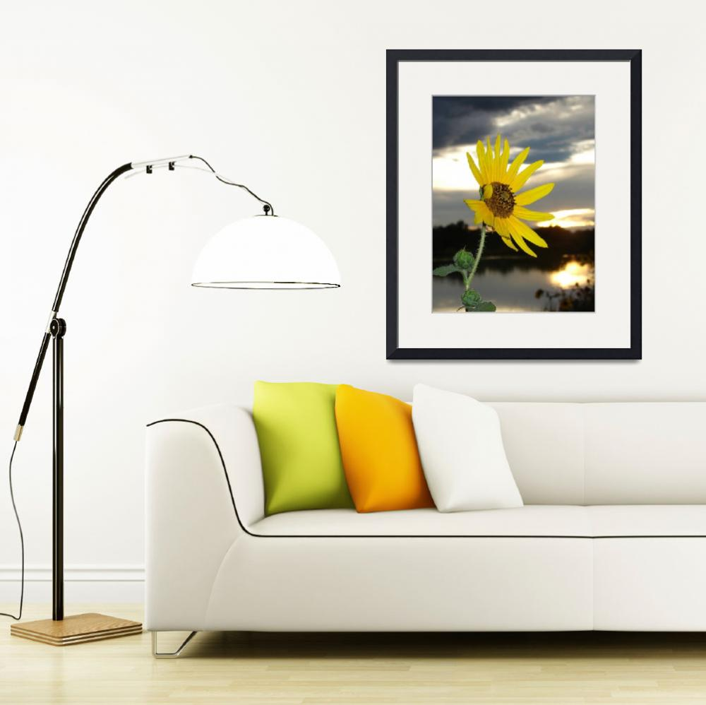"""""""Black Eyed Susan With A Bug&quot  by zbear"""