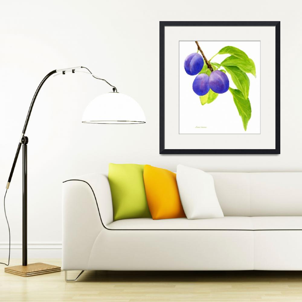 """Blue and Purple Plums on White""  (2012) by Pacific-NW-Watercolors"