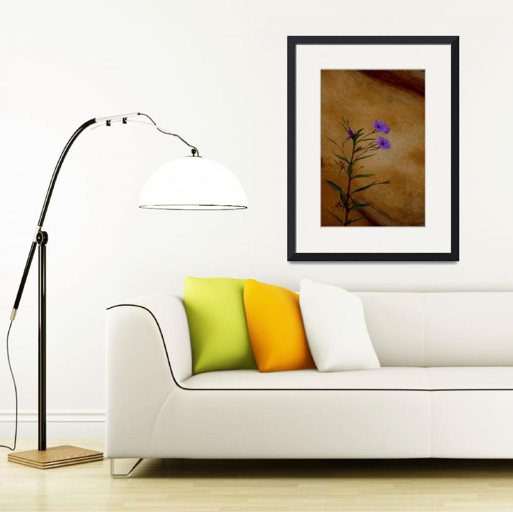 """""""Purple Flower Against Wall&quot  by rubybgold"""
