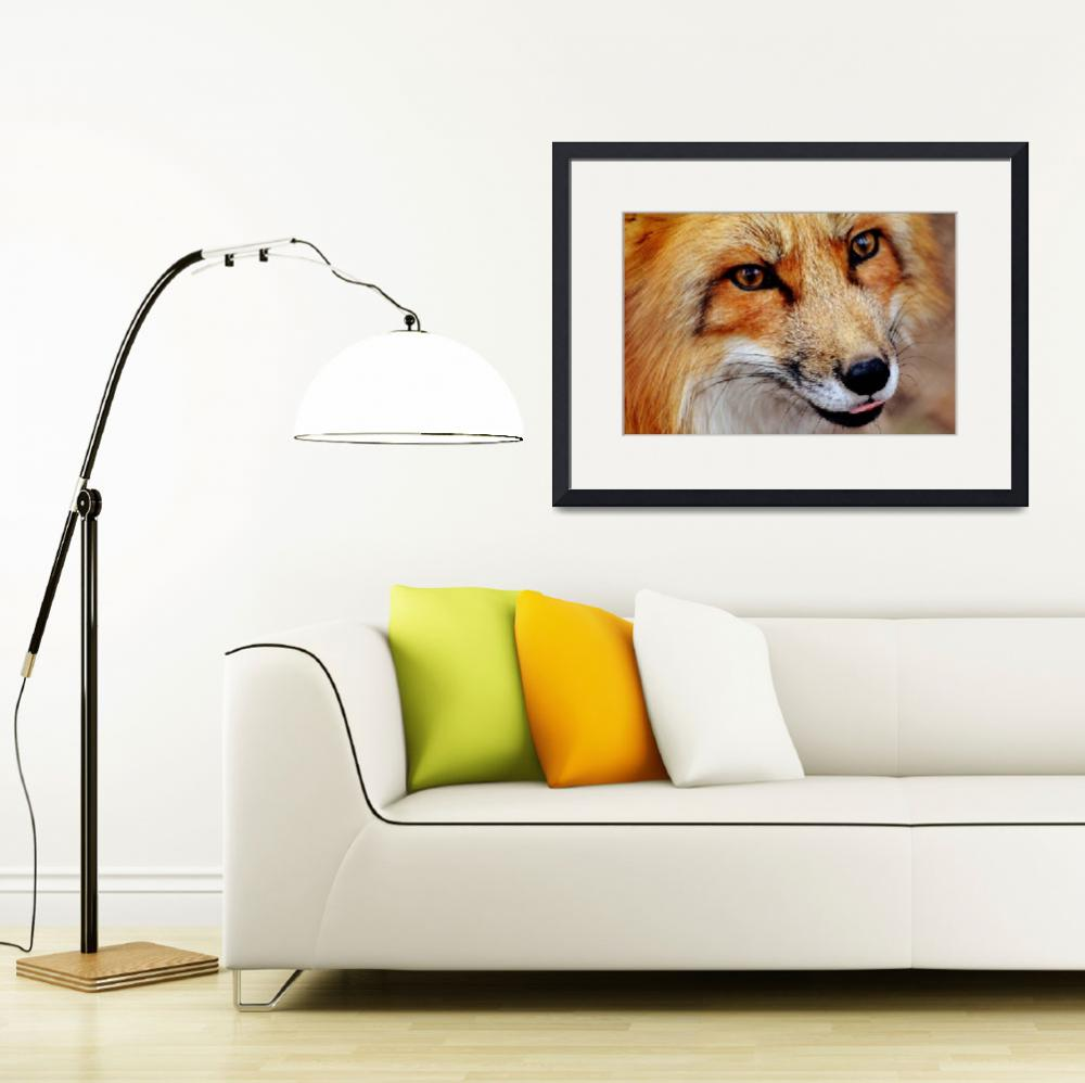 """Red Fox Wildlife Portrait - Rogue Art""  (2017) by rogueart"