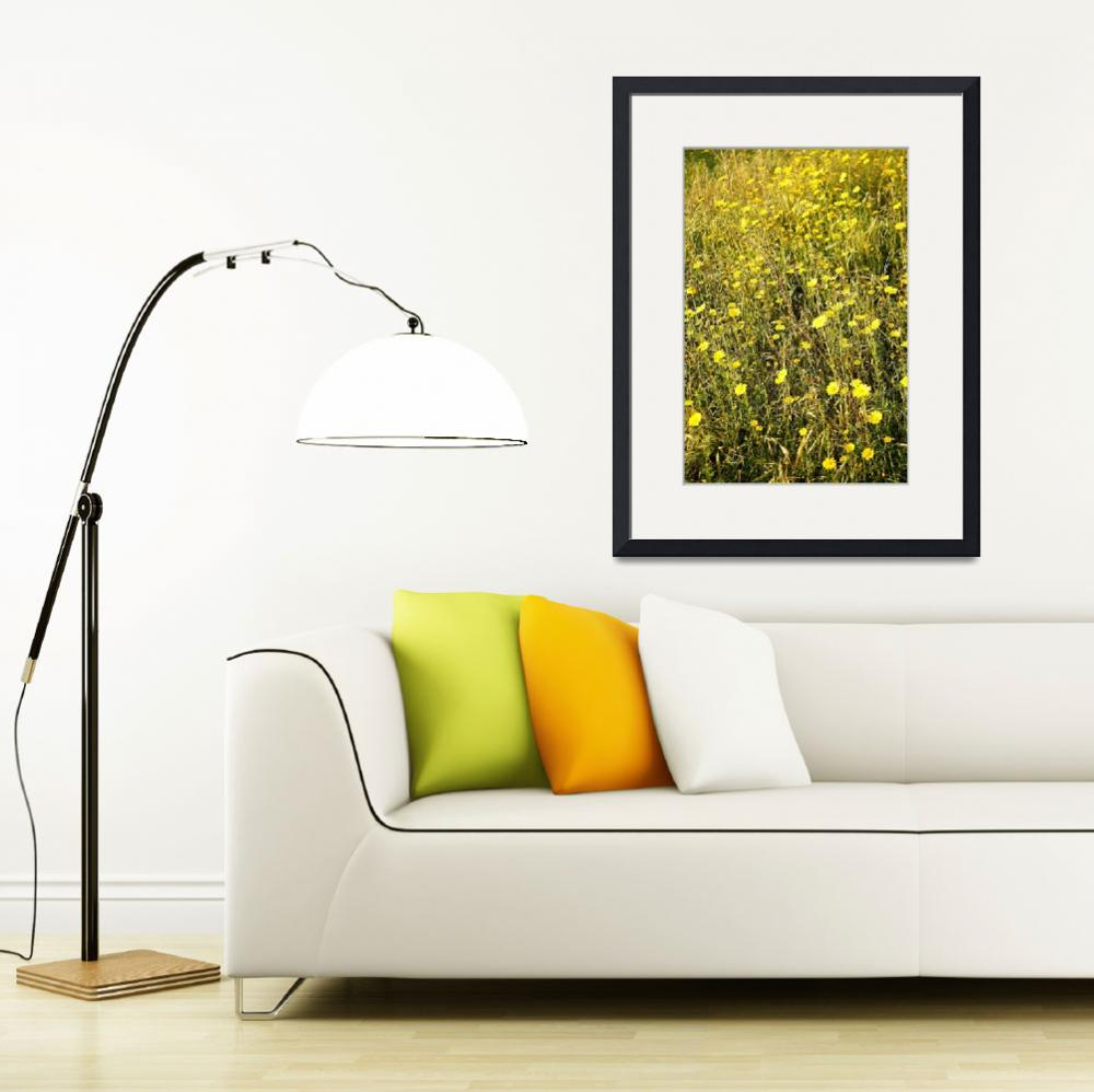 """""""Sunny Yellow Wildflowers of Lebanon 1132&quot  (2010) by rayjacque"""
