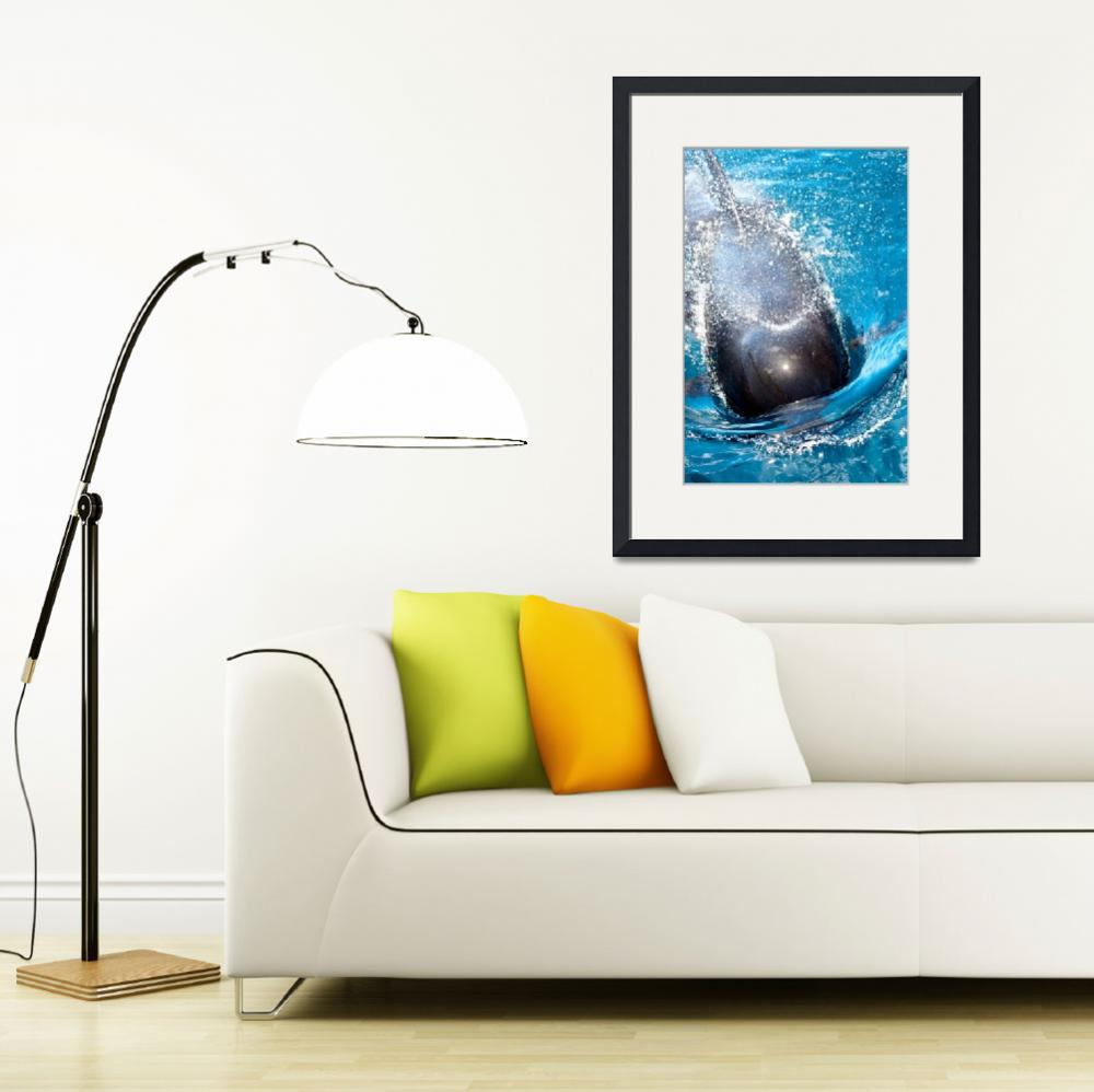 """""""Pilot Whale - Galapagos&quot  (2009) by BrianLewis"""