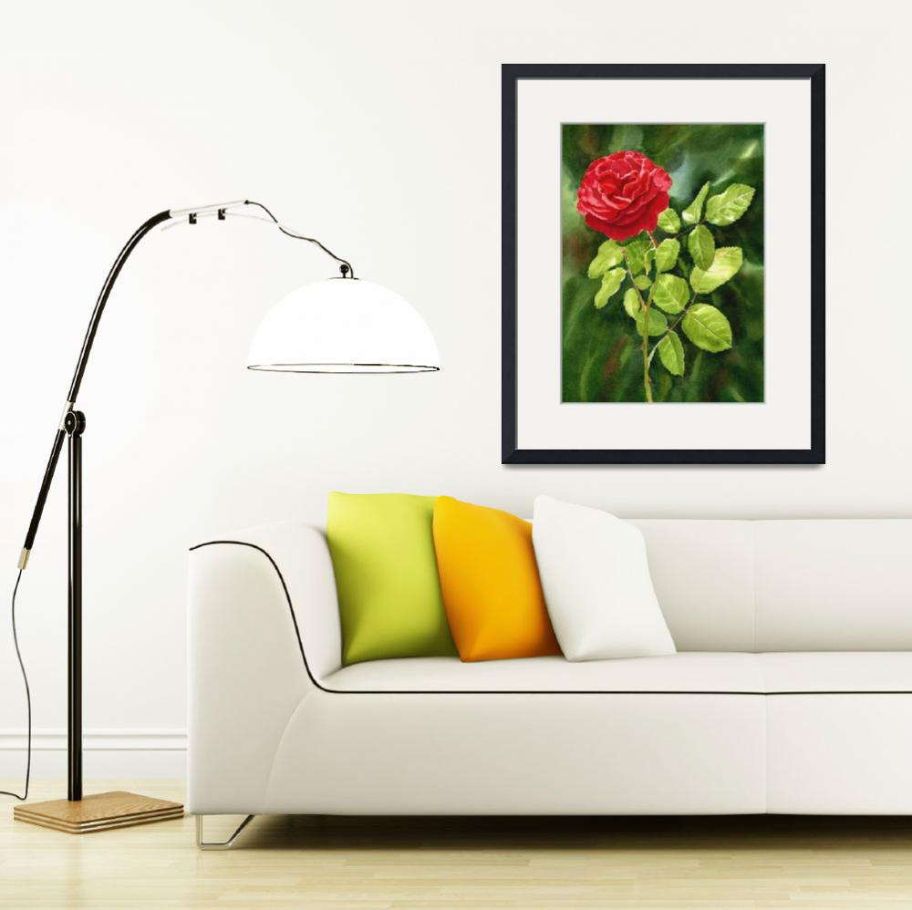 """""""Bright Red Rose with Dark Background&quot  (2015) by Pacific-NW-Watercolors"""