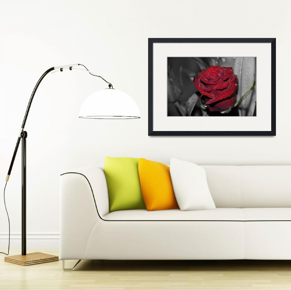 """""""RedRose""""  (2010) by Aby"""