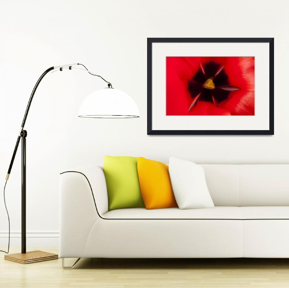 """Red Tulip""  by StevePurnell"