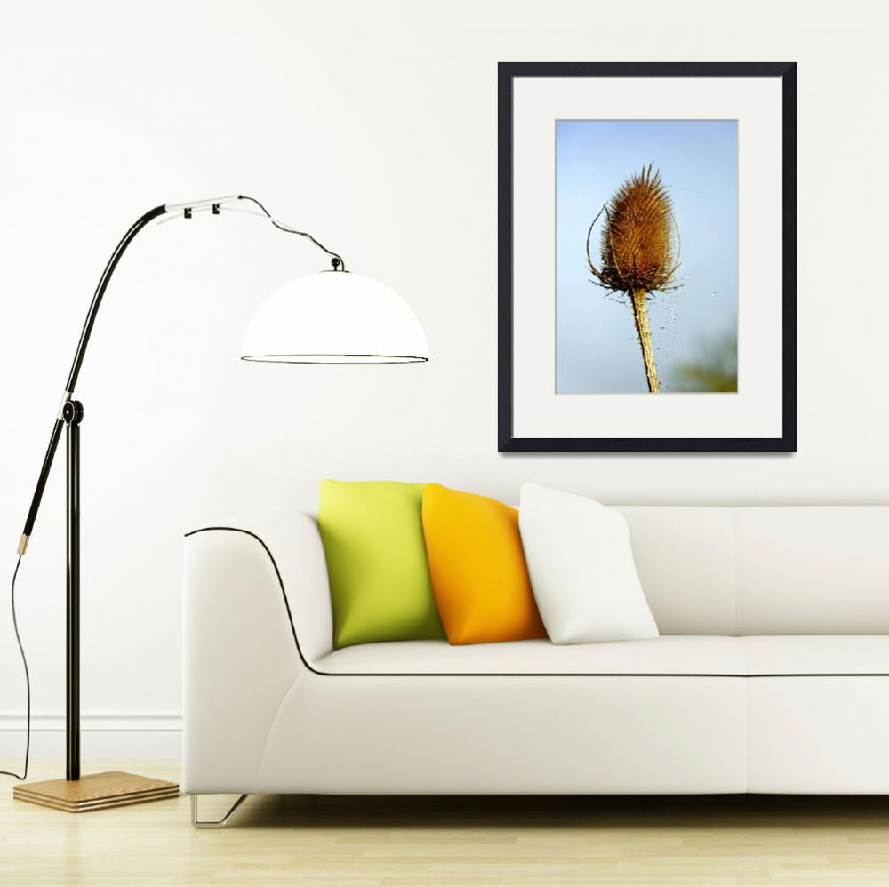 """""""Teasel Laced with Morning Dew (26985-RDA)&quot  (2010) by rodjohnson"""