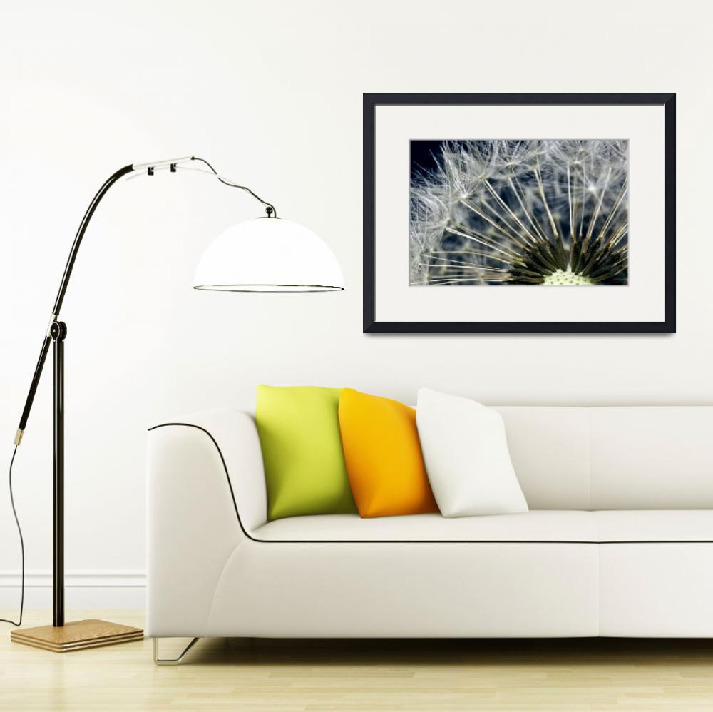 """DANDELION SEED HEAD&quot  (2010) by photographybyryankelly"