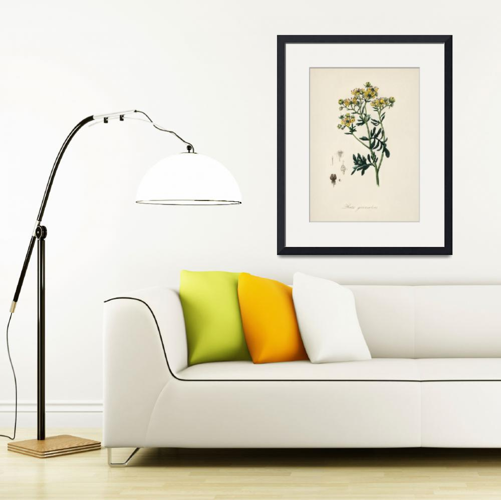 """Vintage Botanical Rue&quot  by FineArtClassics"