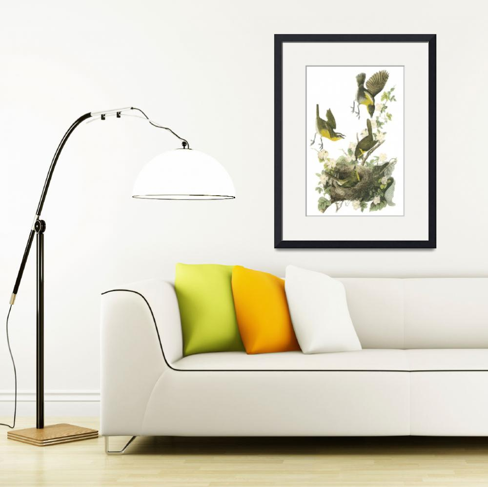 """Yellow-Breasted Chat Bird Audubon Print&quot  by ArtLoversOnline"