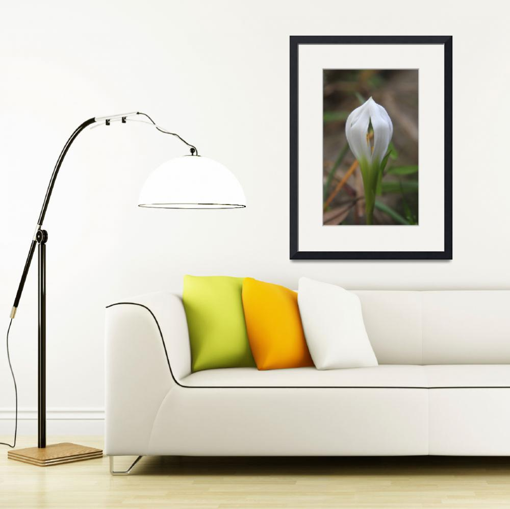 """""""Rain Lily bud&quot  by BABowenphotography"""