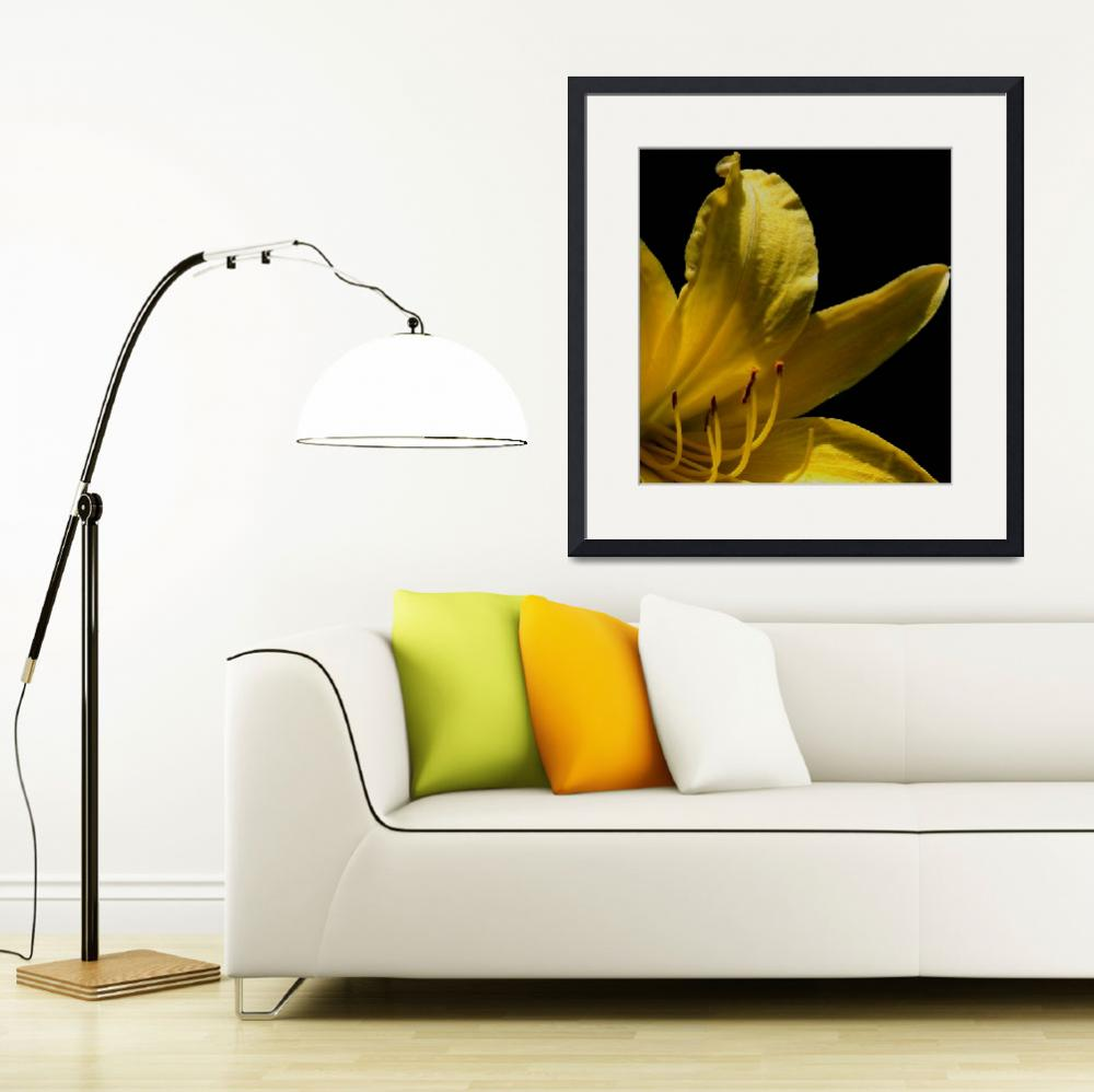 """""""Yellow Day Lily&quot  (2013) by KHarrison"""