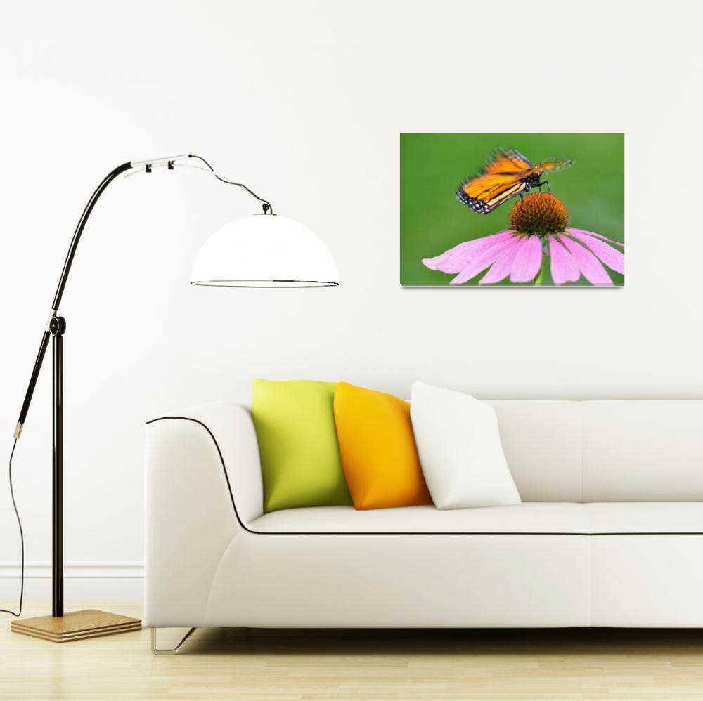 """""""Monarch Butterfly landing on a Coneflower""""  (2009) by evansonart"""