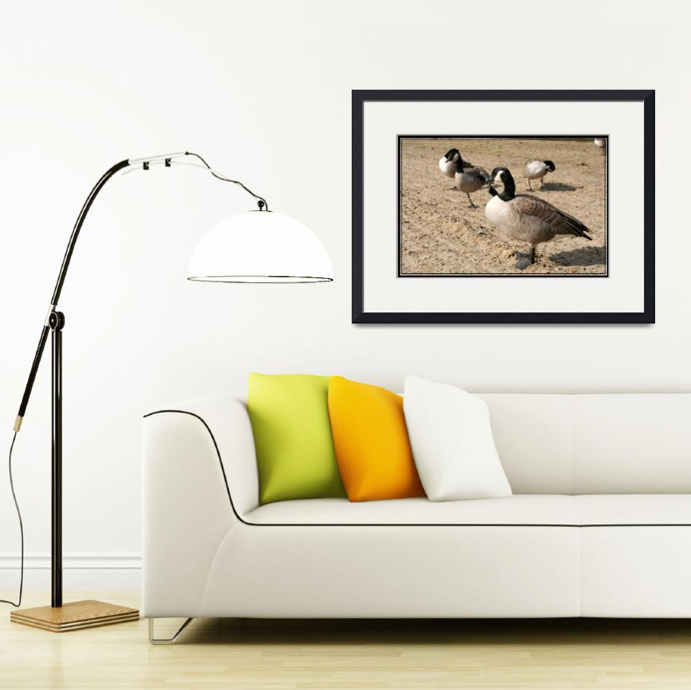 """""""Canadian geese&quot  by sherryswest"""