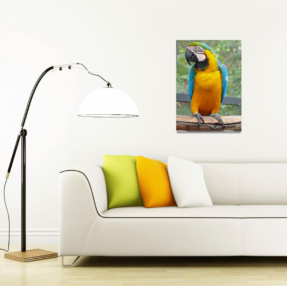 """Blue and Gold Macaw""  (2008) by stockphotos"