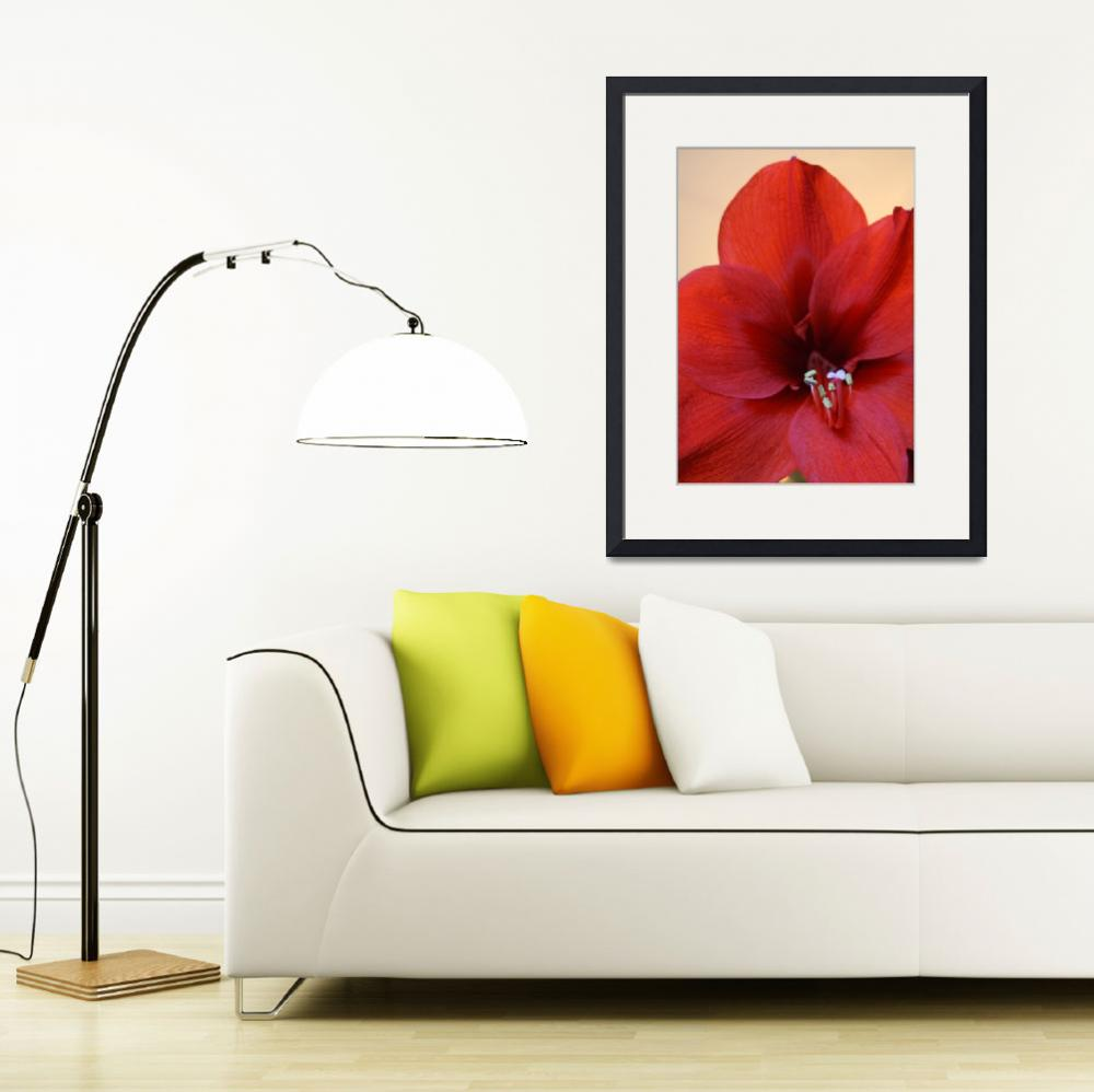 """""""Red Flower""""  (2012) by feophotos"""