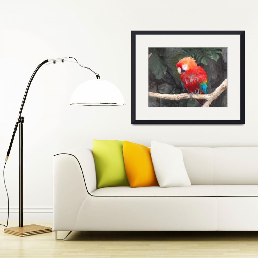 """Macaw Parrot&quot  (2015) by SaraOmaha"